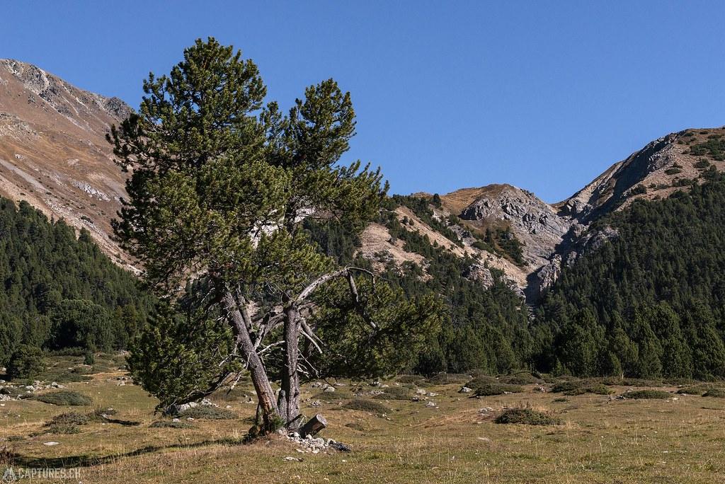 Landscape - Val Mora
