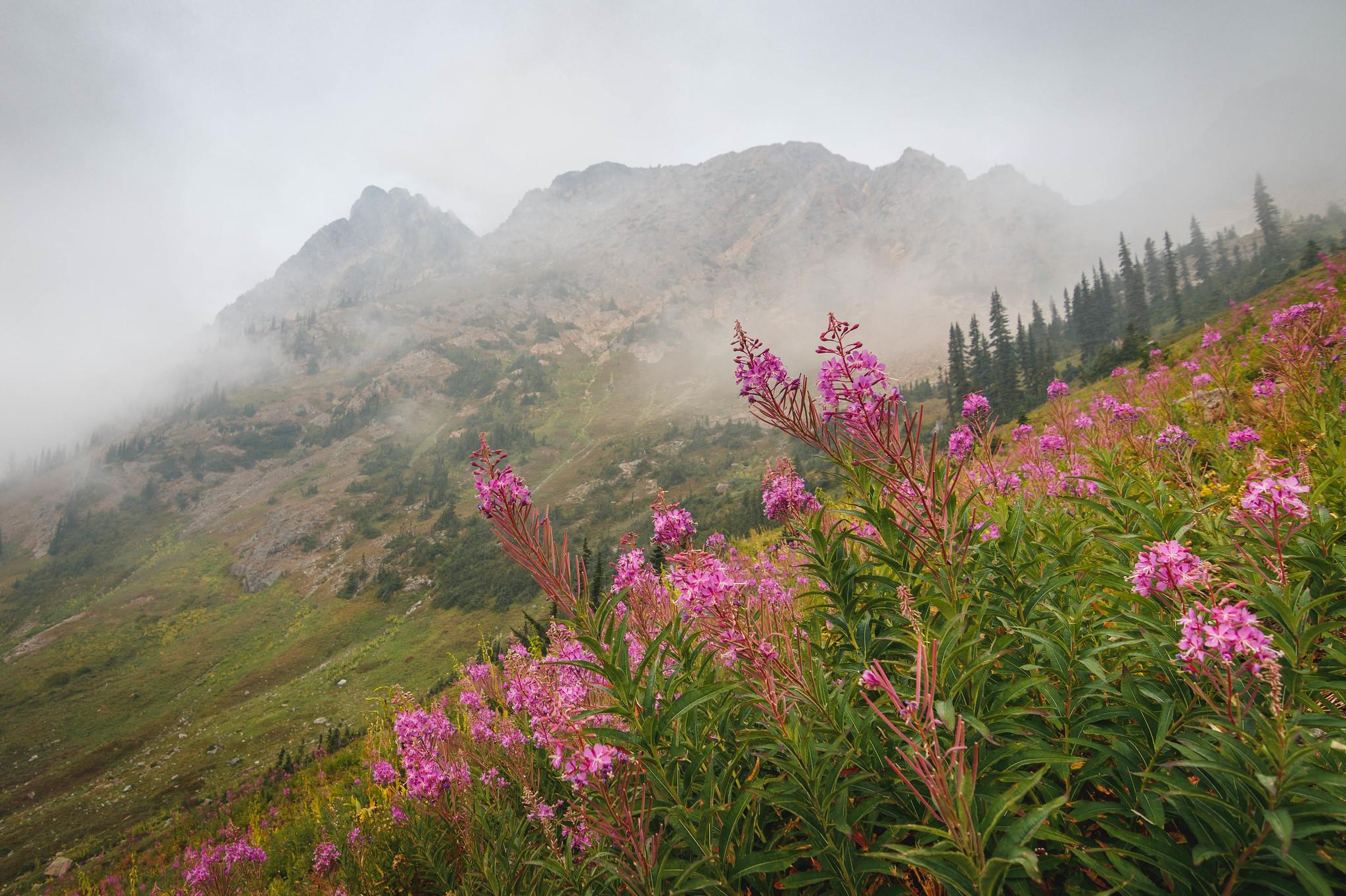 Alpine beauty