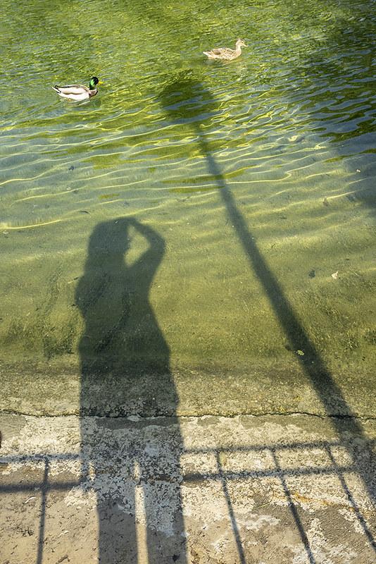 La sombra y los patitos
