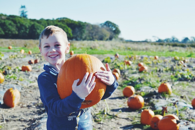 Best pumpkin picker
