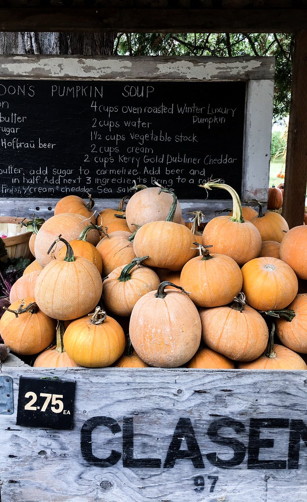 Winter Luxury Pumpkins at Gordon Skagit Farms