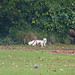 Kings Heath Park - walkies for this dog