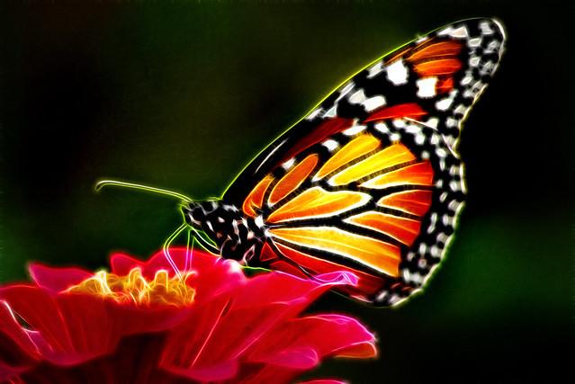 Artistic Monarch 6-0 F LR 9-12-18 J073