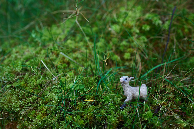 """""""Ireland has the most plushest moss ever!"""" says baby goat."""