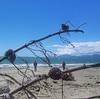 Post run legstretch #Rabbitisland #seagazing #mapua #hauora
