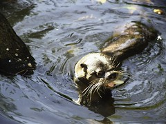 Otter Bokeh - Schleswig-Holstein - Germany