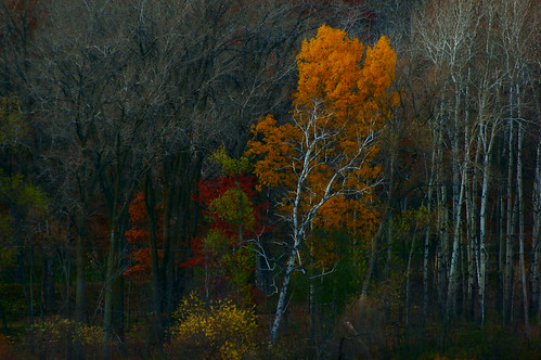 trees fallcolors fallfoliage nature lebanonhillspark gold red green treemendous