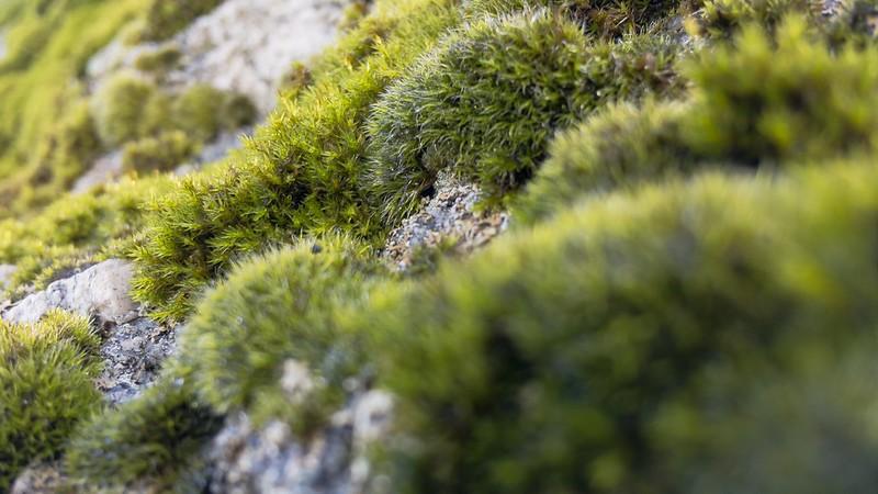 Colour on Mardon Down Rocks (south)