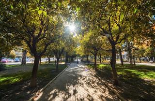 Path of Sunlight Park