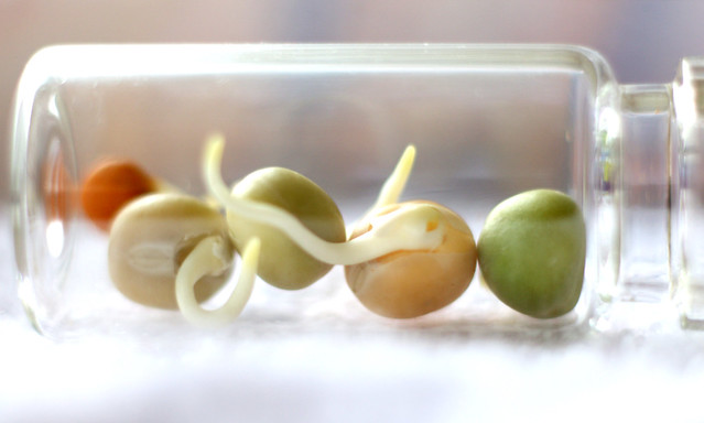 Captive Beans