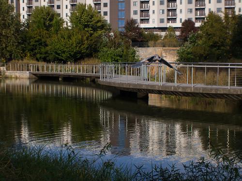 Pond at Historic Fourth Ward Park (02)