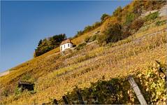 La Route des Vins - Alsace