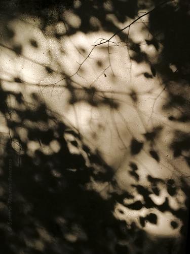 Tutte le ombre del vento