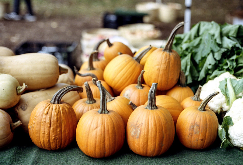 Mini Pumpkins for Sale_