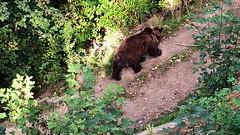 Bern: BärenPark