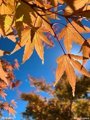 Sun Shining Through Colorful Autumn Leaves
