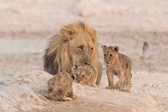 with dad as backup... by v_ac_md