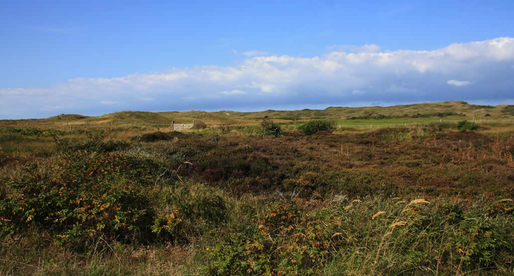 Top things to do on Texel, The Netherlands: The Dunes of Texel | Your Dutch Guide