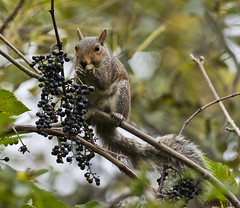 squirrels chipmunks