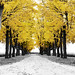 a row of trees-only the gold by Hal Halli....happy everything!!