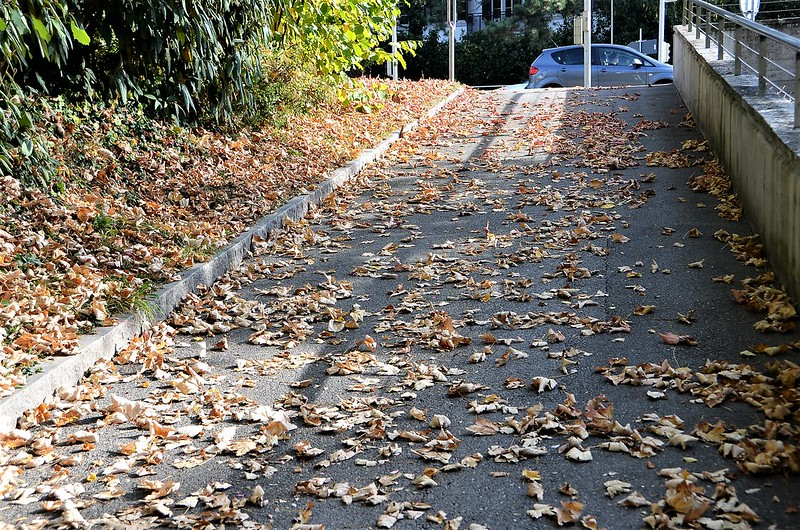 Autumn 18.10 (3)
