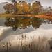 Derwent water autumn reflection 3 by Alf Branch