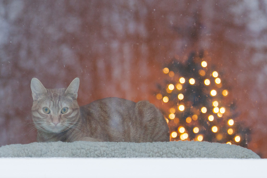 As the snow falls, our cat Sam watches me from his window seat while I was outside shoveling