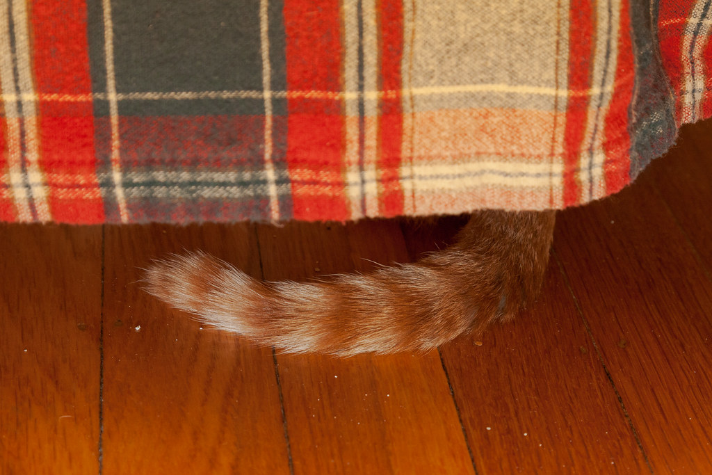 Our cat Sam hiding under the bed as a kitten but with his tail still visible