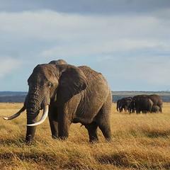 Elephants #nowfilming #zebraplainsmoments