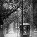 Street Car in the Rain