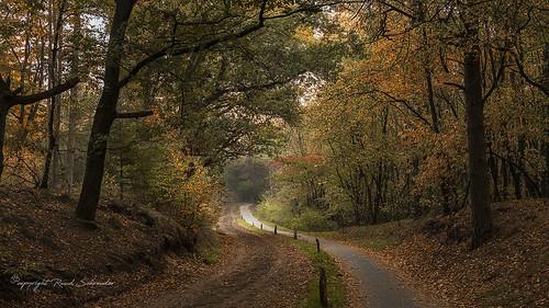 Autumn in Salland