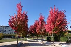 Parc Vignières-Pommaries @ Annecy