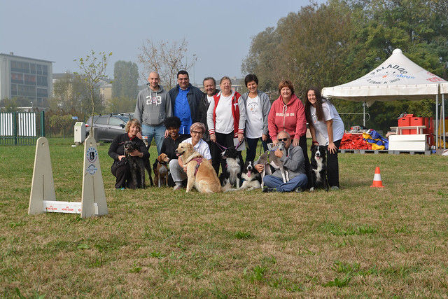 Flyball Stage