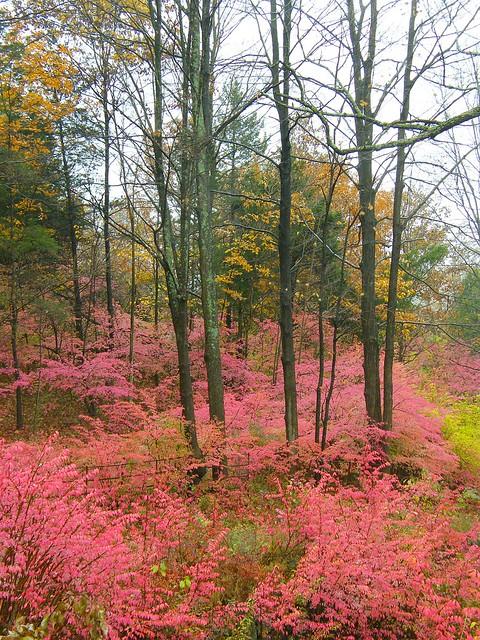 Pink Fall Season
