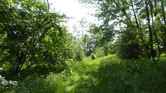 RNR du marais de Wagnonville (25)