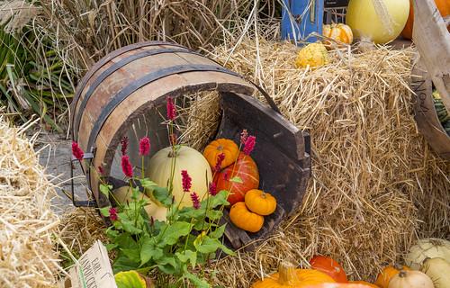 Halloween Barrell - National Botanic Gardens - Dublin
