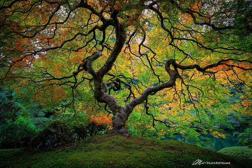 tree color fall autumn portland japanese garden canon tripod
