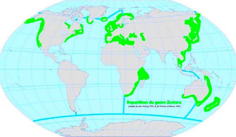 carte-herbier-marin