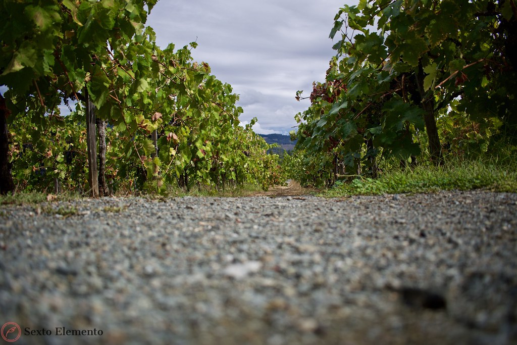 low-angle-picture-of-vineyards