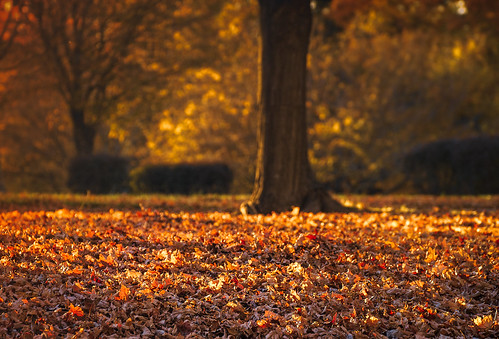 landscape autumn fall leaves sunlight