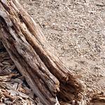 Lake Pepin Driftwood