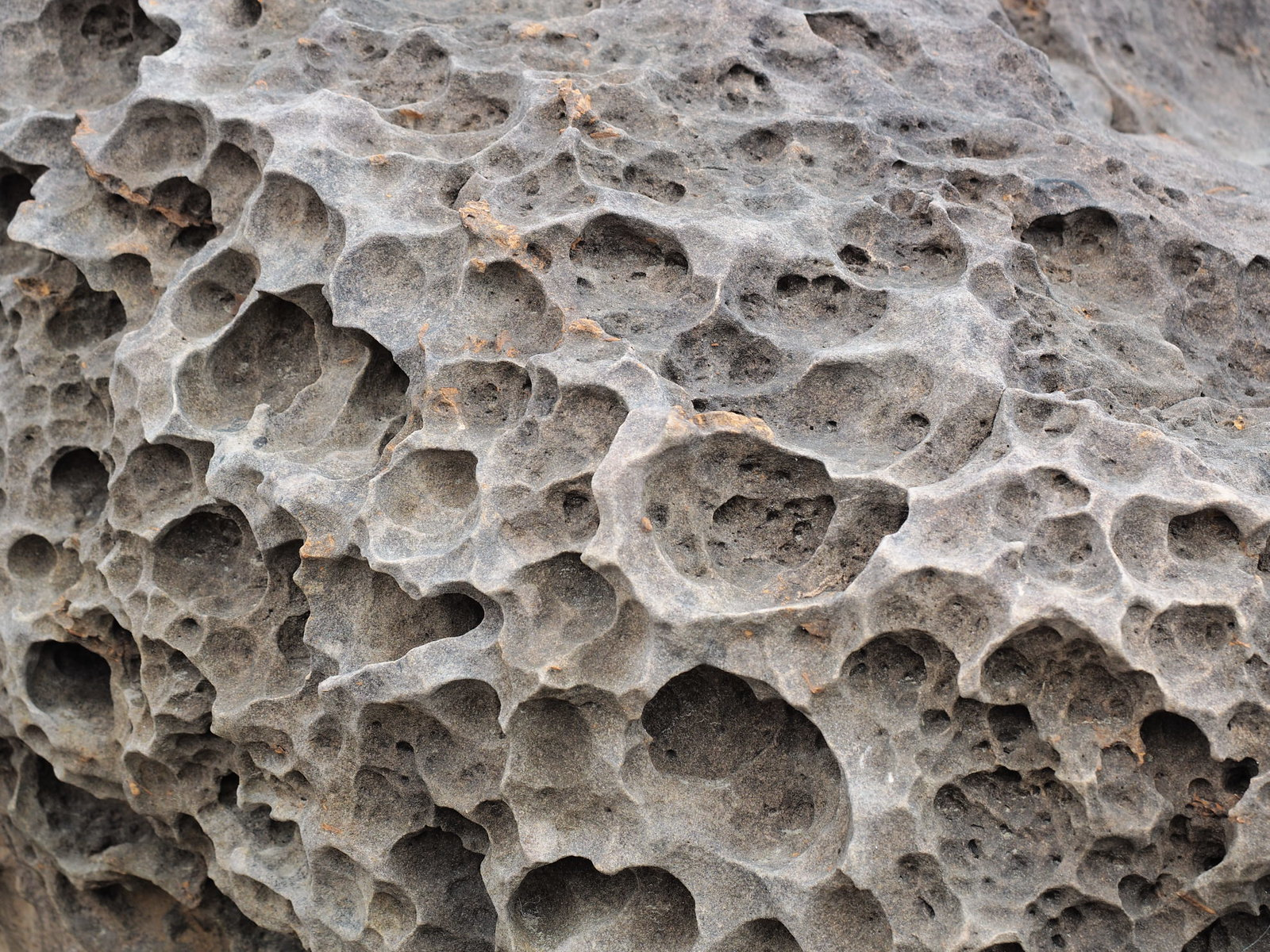 A closer look on the honeycomb-like on the rock at Yehliu Geopark
