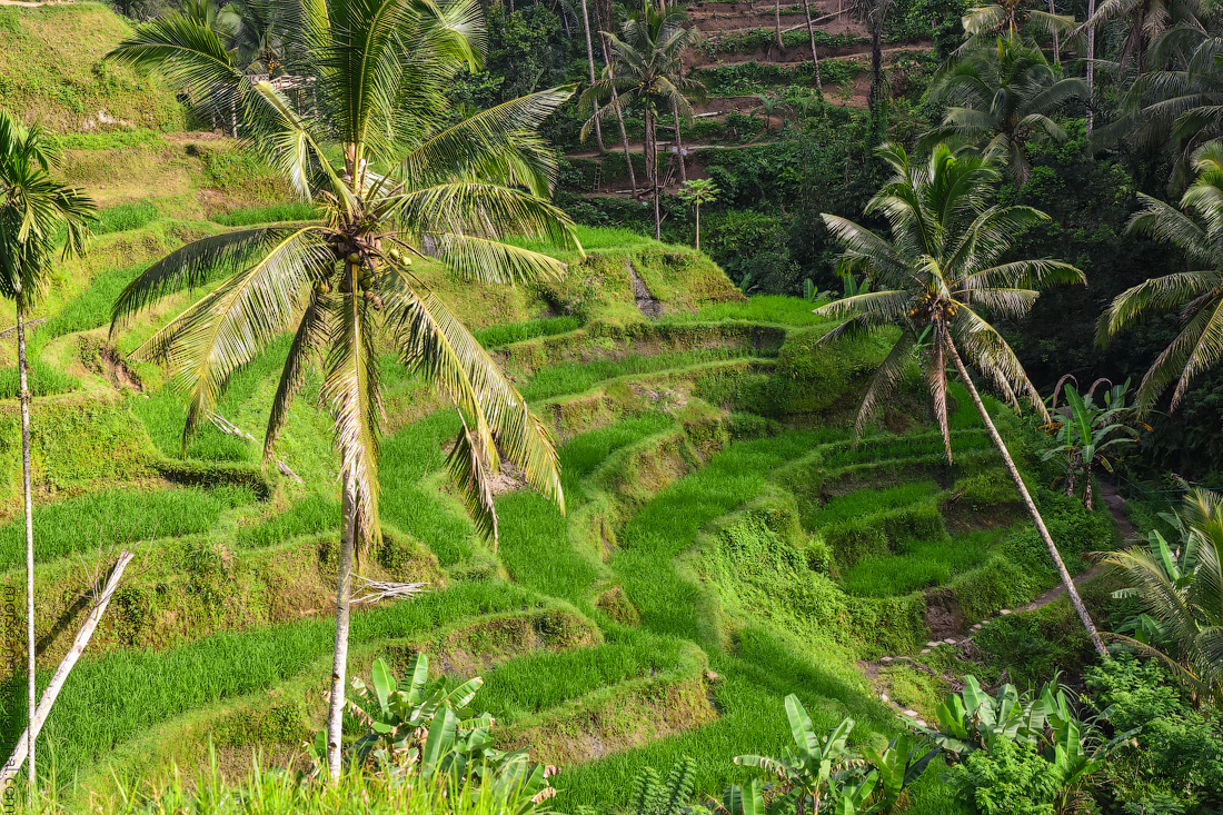 Ubud-Intertainment-(9)