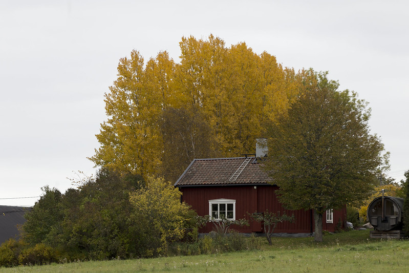 Autumn at Husby