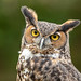 Great horned owl by Nature as Art Photography