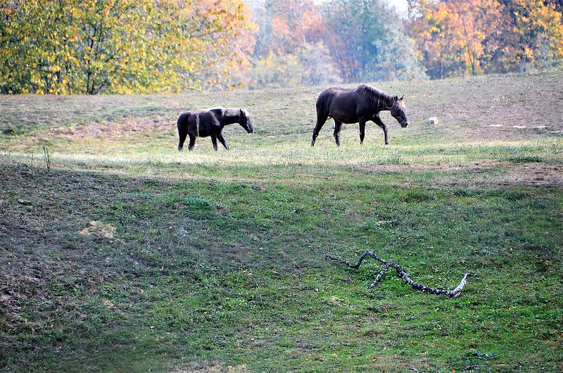Horses 23.10 (3)