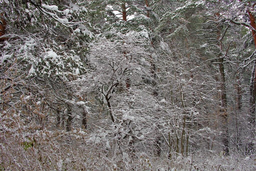 Ноябрь в Сибири - зима!