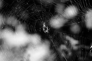 spider study 2