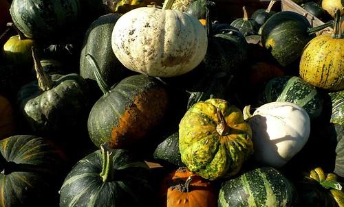 Autumn !  - On Explore  Nov/21 -