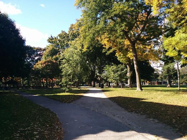 In Dufferin Grove Park (1) #toronto #dufferingrove #dufferingrovepark #parks #fall #autumn #latergram